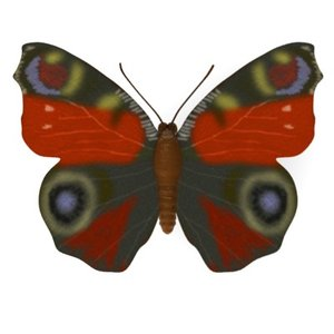 butterfly inachis io 3d model