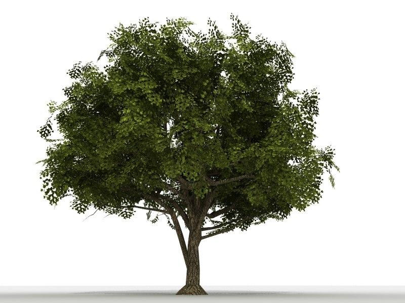 photo real maple tree 3d model