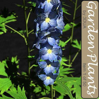 plant 001 delfinium flowering 3d model