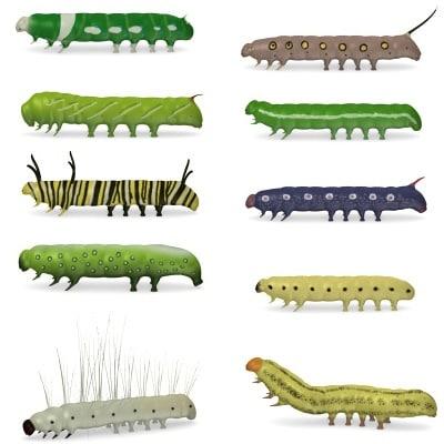 butterfly bugs worm 3d model