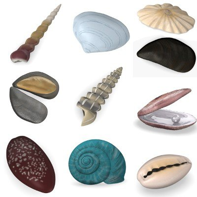 shells 3d model
