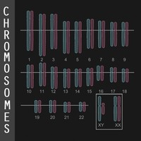 human chromosome diagram 3d model