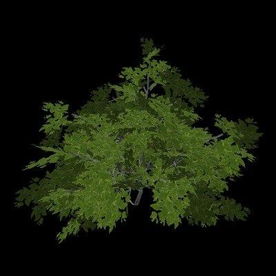 green bush 3d model
