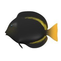 tropical fish 3d model