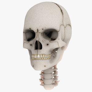 anatomical skull 3d model