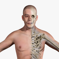 3dsmax human anatomy male skeletal