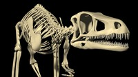 eoraptor lunensis dinosaur 3d model