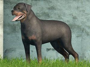 rottweiler blender 3d model