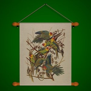 wall parrots fr 3d model