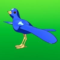 bird anime 3d model