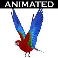 scarlet macaw 3d model