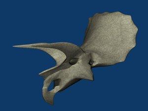 skull triceratops 3d model