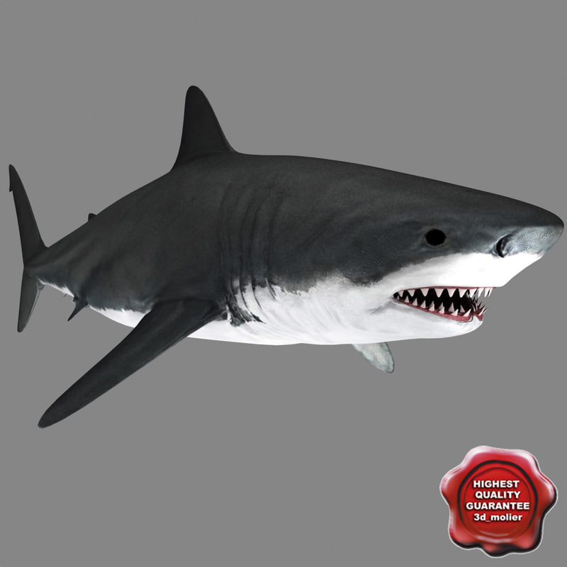shark static 3d model