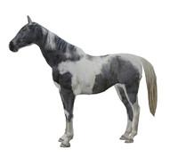 horse c 3d model