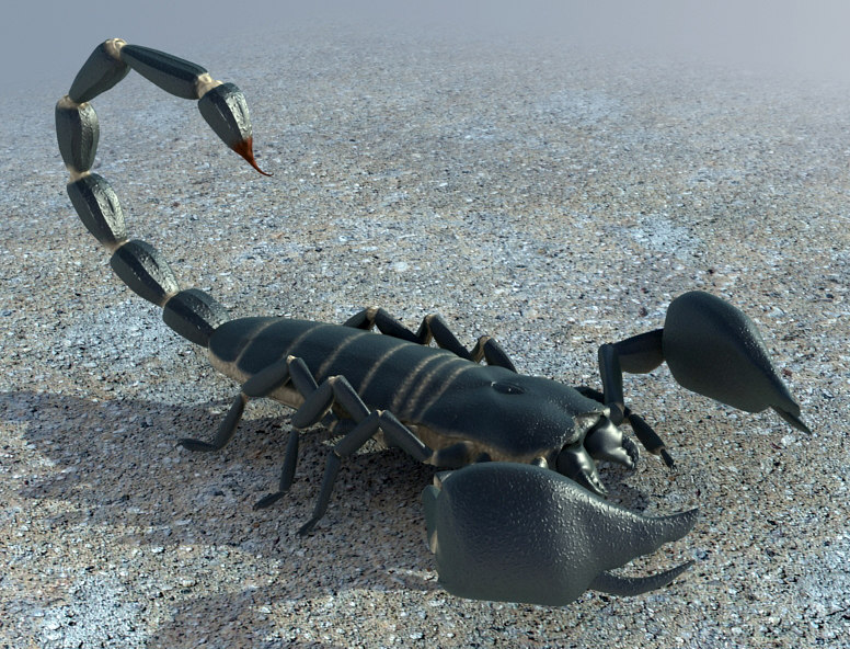 scorpion scorp black 3d model