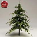 fir tree 3D models