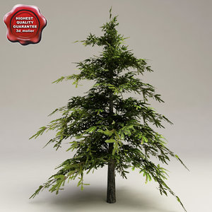 low-poly fir tree 3d model