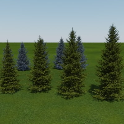tree blue spruce white 3d model