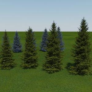 tree blue spruce white 3d model