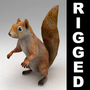 3d rigged squirrel model