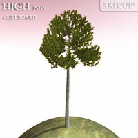 maya evergreen tree