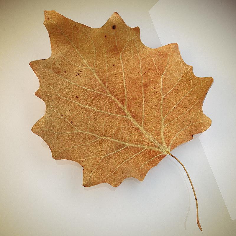 autumn leaf poplar dry 3d model