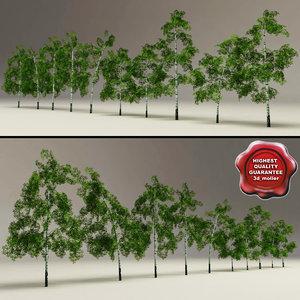 3d model low-poly birch trees v2