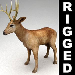 3ds max rigged deer