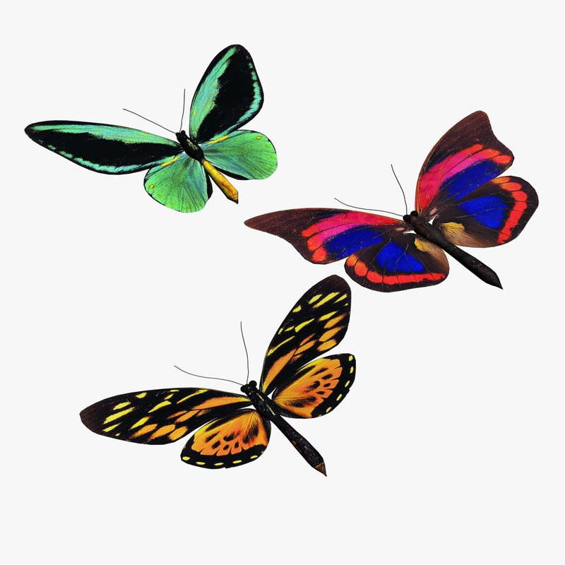 colorful butterflies 3d model