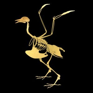 realistic bird skeleton 3d model