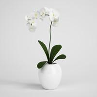 CGAxis flower 10