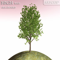 tree 047