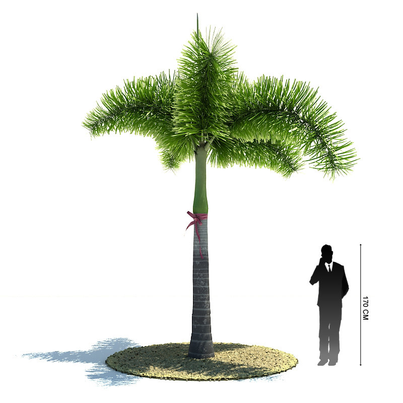 exotic tree wodyetia bifurcata 3d model