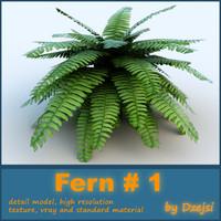 Fern # 1