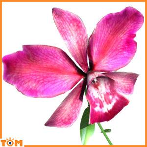 orchid flowers 3d model