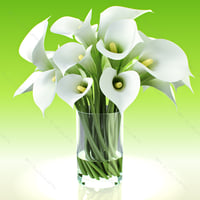 3d model realistic flowers calla lily