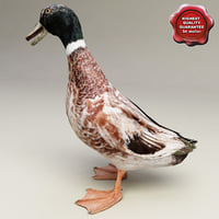duck modelled 3d max