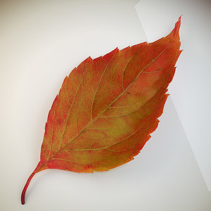autumn leaf red 3d max