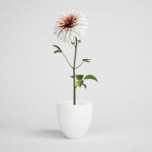 plant c4d