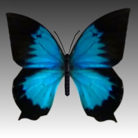 3d blue butterfly fly model