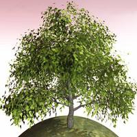 3d tree plant model