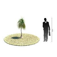 exotic tree nolina recurvata 3d model
