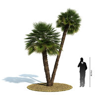 exotic tree chamaerops humilis 3d 3ds