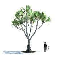 exotic tree pandanus utilis 3d model