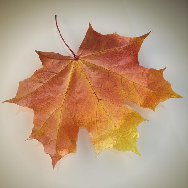 realistic autumn leaf max
