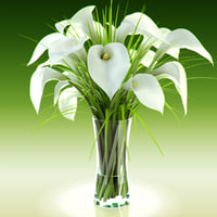 Bouquet of white callas