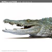 3d morelli crocodile - alligator model