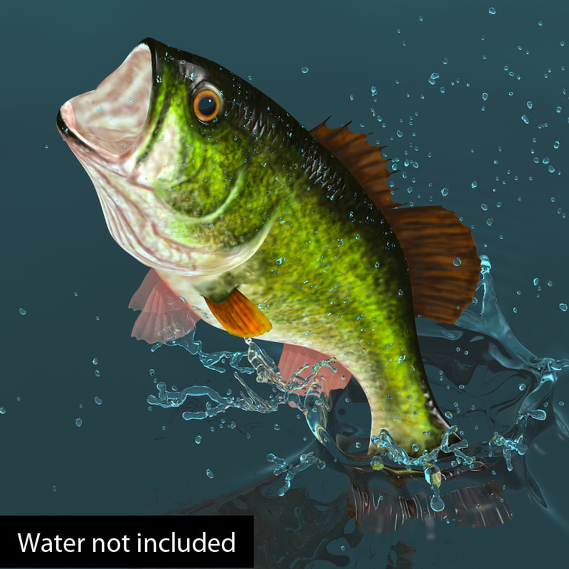 largemouth bass fish 3d model