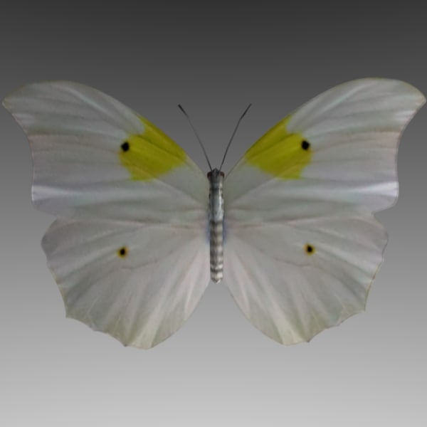 3d butterfly fly