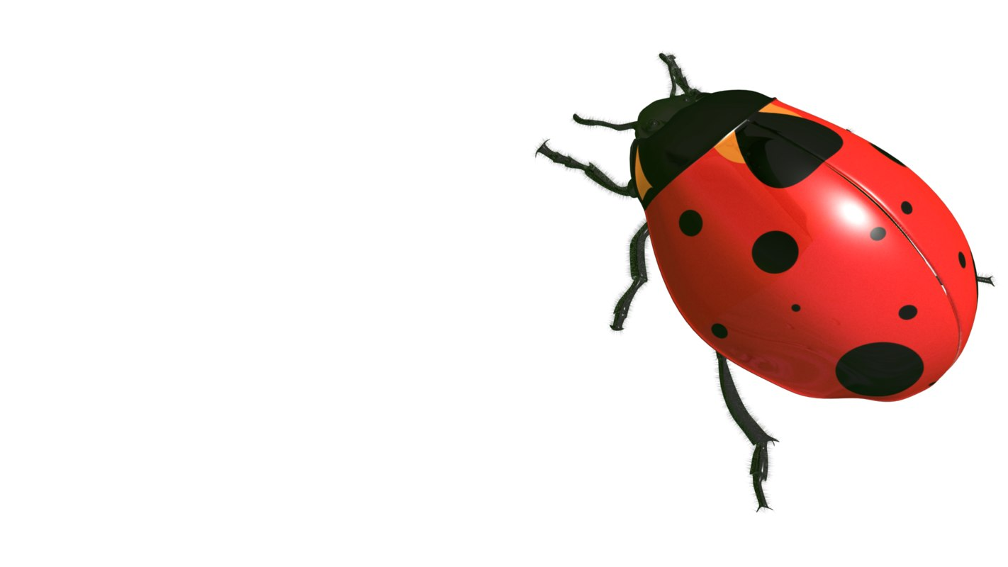 3ds max lady bug